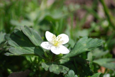 flower4-19.jpg