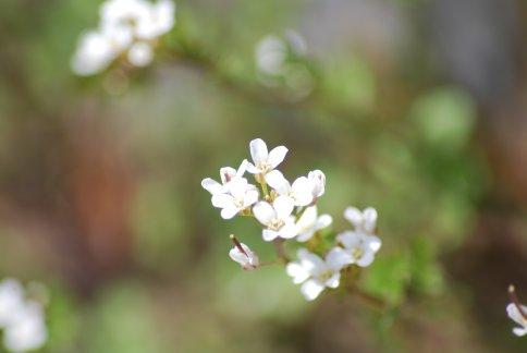 flower4-21.jpg