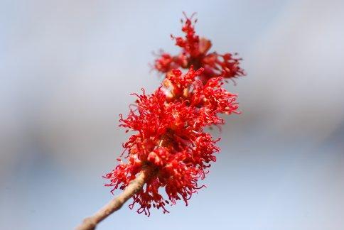 flower4-22.jpg