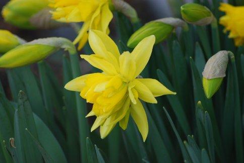 flower4-24.jpg