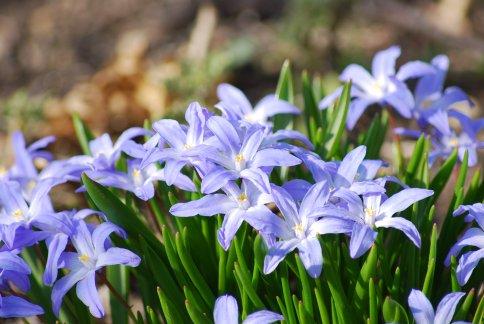 flower4-25.jpg