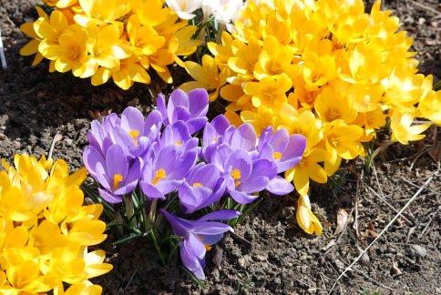 flower4-6.jpg