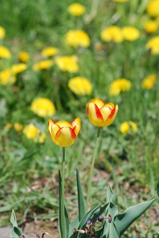 flower4-62.jpg