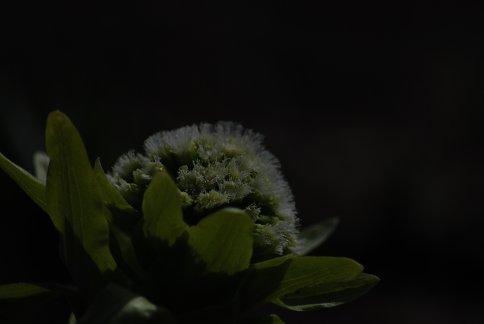 flower4-8.jpg