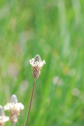 flower4-81.jpg