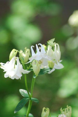 flower4-99.jpg
