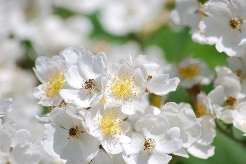 flower5-21.jpg