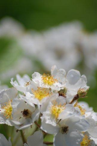 flower5-22.jpg