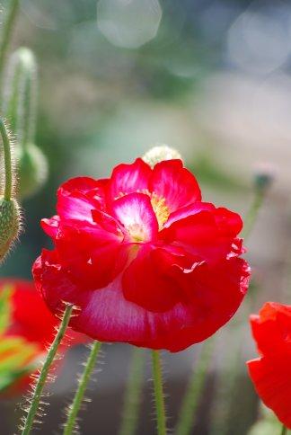 flower5-23.jpg