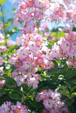 flower5-24.jpg