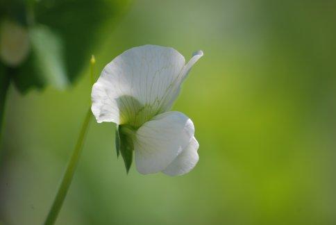 flower5-26.jpg