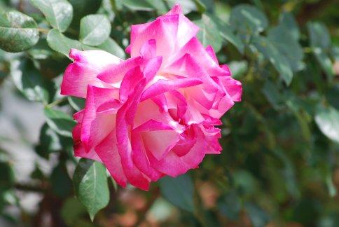 flower5-3.jpg