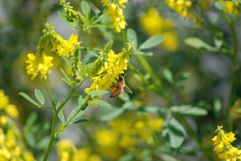 flower5-31.jpg