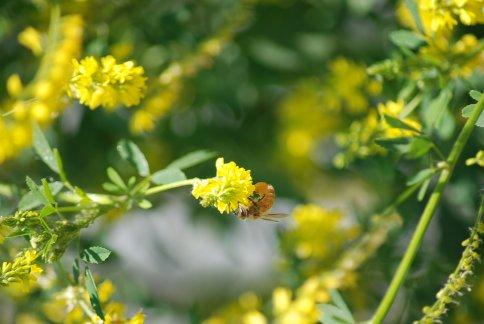 flower5-32.jpg