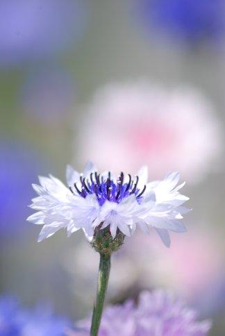 flower5-33.jpg