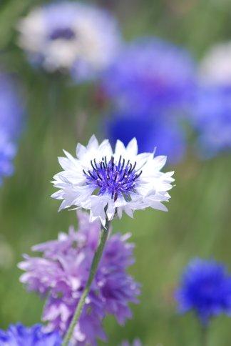 flower5-34.jpg