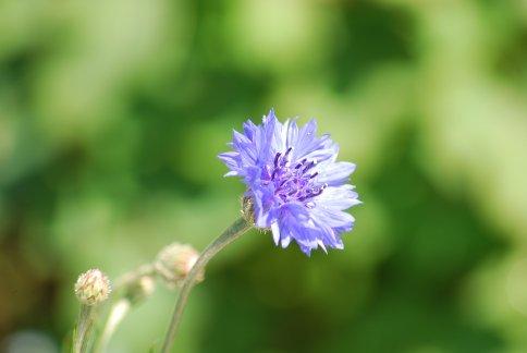 flower5-35.jpg