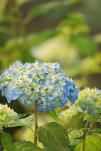 flower5-37.jpg