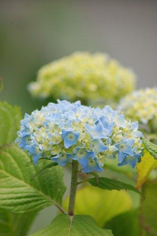 flower5-41.jpg