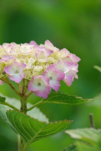 flower5-42.jpg
