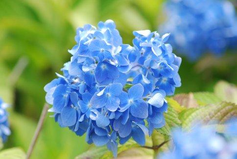 flower5-43.jpg