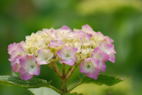 flower5-44.jpg