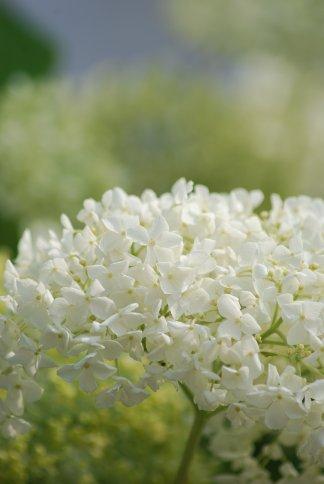 flower5-45.jpg