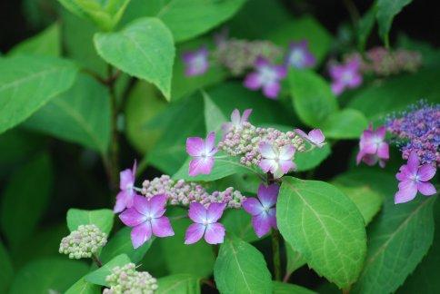flower5-46.jpg
