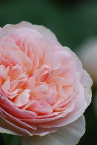 flower5-48.jpg