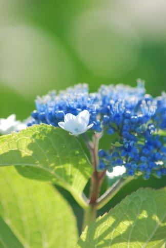 flower5-49.jpg