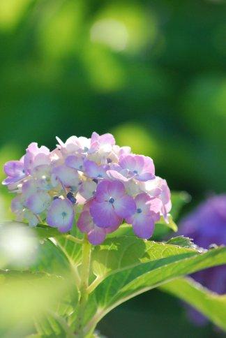 flower5-50.jpg