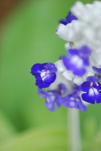 flower5-7.jpg