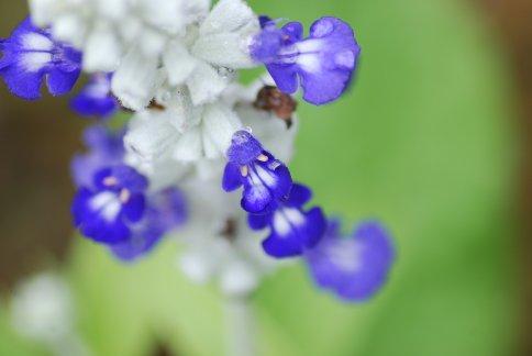 flower5-8.jpg