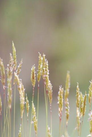 grass4-19.jpg