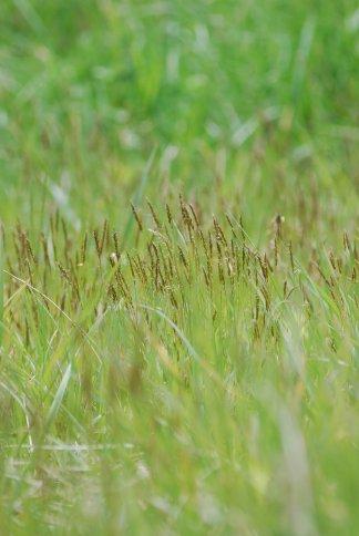 grass4-20.jpg