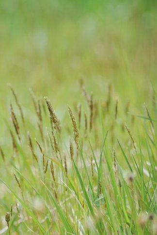 grass4-21.jpg