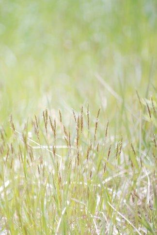 grass4-22.jpg