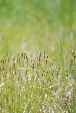 grass4-23.jpg