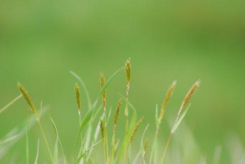 grass4-25.jpg