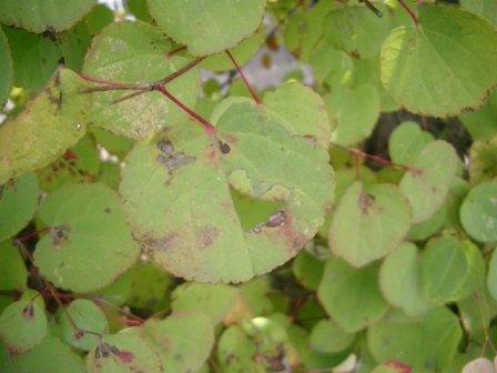 leaf3-1.jpg