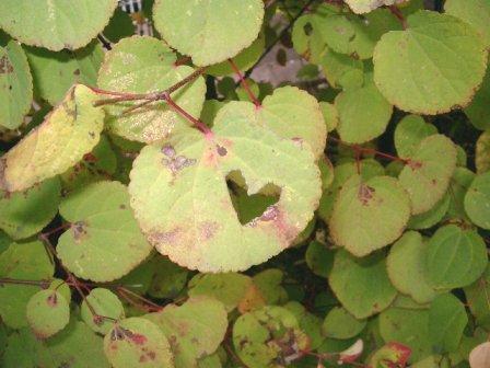 leaf3-2.jpg