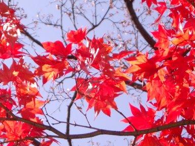 leaves3-1.jpg