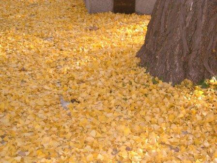 leaves3-10.jpg