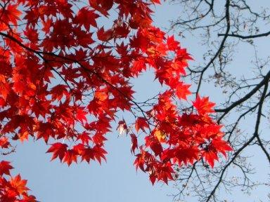 leaves3-2.jpg