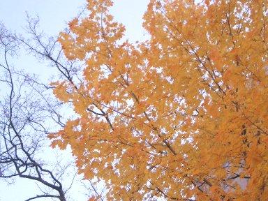 leaves3-3.jpg