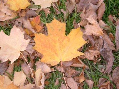 leaves3-4.jpg