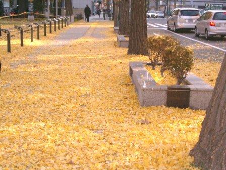 leaves3-9.jpg