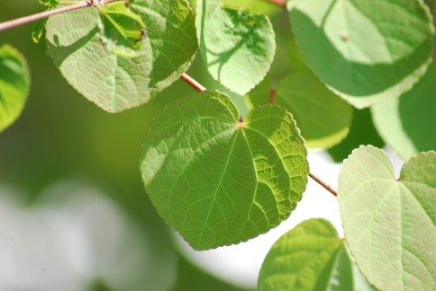 leaves4-1.jpg