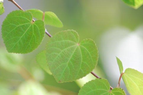 leaves4-2.jpg