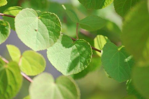 leaves4-3.jpg